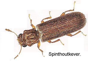 spinthoutkever
