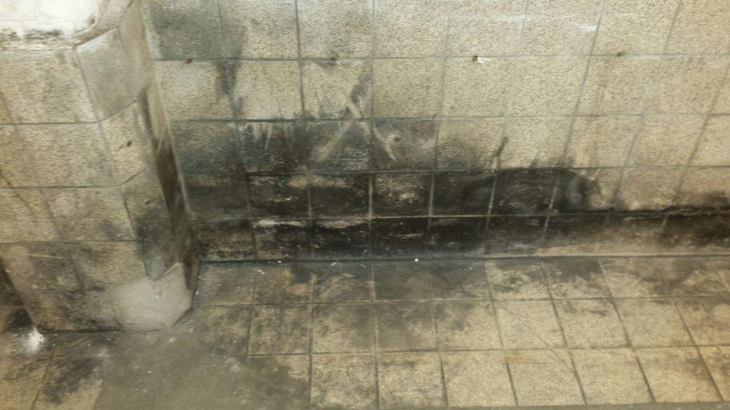 Badkamer Schimmel Verwijderen : Schimmel bestrijden b team